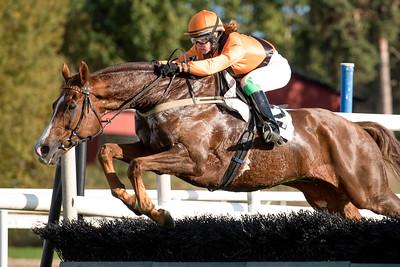 Russian Roulette och Anna Pilroth hoppar sista häcken   Täby 150930   Foto: Elina Björklund / Svensk Galopp